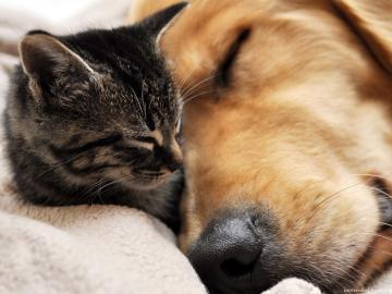 小猫和黄狗