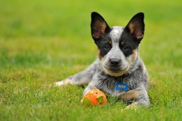 宠物狗与球场