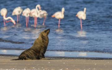 火烈鸟海狮