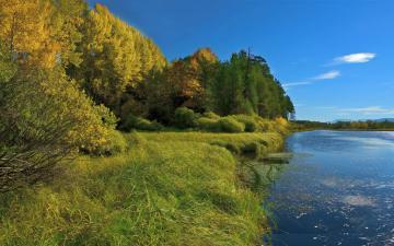 秋季树林河流与草地