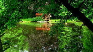 树林里的房子与河流