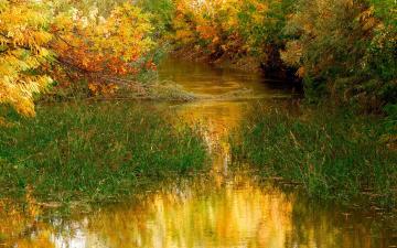秋天树林小河风景
