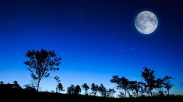 树林月夜风景