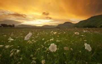 鲜花草地黄昏风景