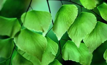 植物绿叶背景