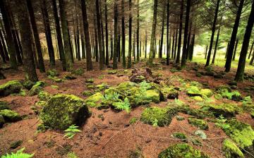 树林风景壁纸